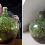 Rastlina uväznená vo flaši 40 rokov