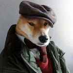Shiba - pes so sľubnou kariérou