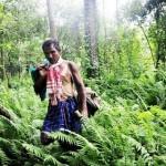 Muž, ktorý sám vypestoval 500000 hektárový les